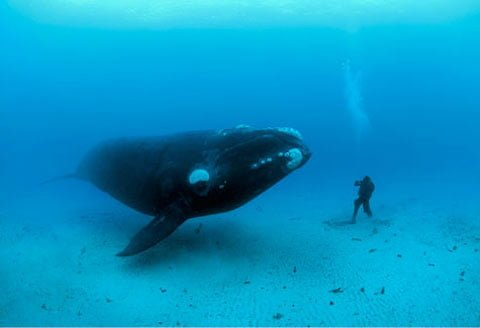 It's not only a Whale. It's the Right Whale.