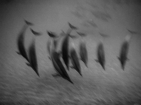 blurry_dolphins_on_lanai_dancing