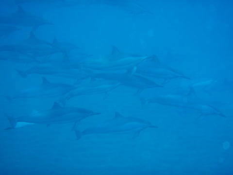 dolphins_lanai_ronnestam_photography