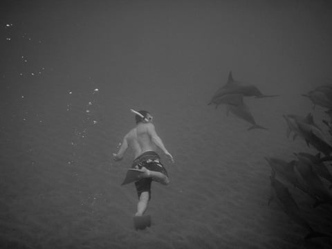 ronnestam_diving_with_dophins_lanai